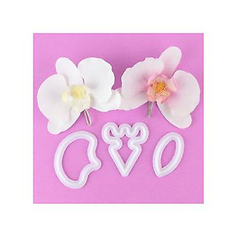 FMM Moth Orchidee