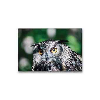 Euraasian kotkapöllö. Juliste -Kuva Shutterstock