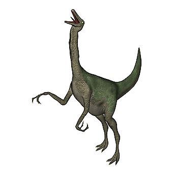 Галлимим динозавра ревом белый фон Плакат Печать