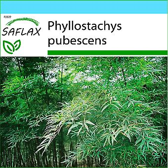 Saflax - gave sett - 20 frø - Moso bambus - Bambou Moso - Moso / Bambù gigante - Bambu moso - Moso Riesenbambus