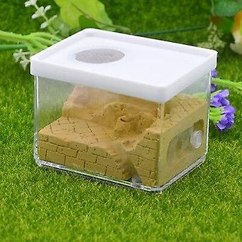 Εξωραϊσμός οικολογικό γύψο Ant Αγρόκτημα Τετραγωνική Φωλιά