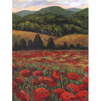 Blue Ridge Poppies affisch Skriv av Linda Pirkle (12 x 16)