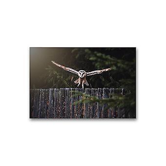 Owl Landing On A Fence Poster -Bilde av Shutterstock