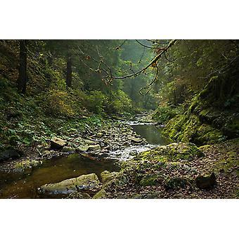 Tapetmaleri Magisk Schwarzwald om høsten
