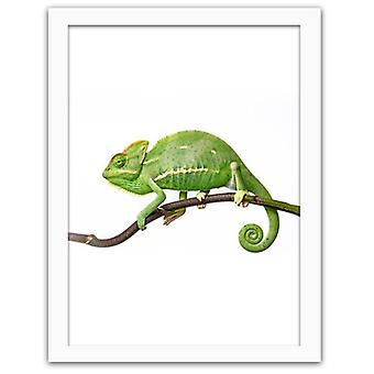 Picture In White Frame, Veiled Chameleon