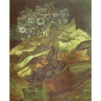植木鉢のシネラリア、ヴィンセント・ヴァン・ゴッホ、54.5x46cm