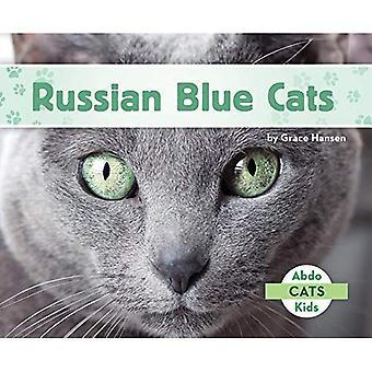 Russisk blå katter (katter sette 2)
