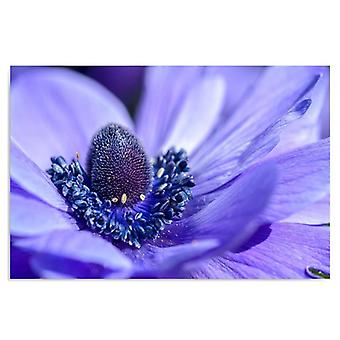 Deco Panel, Periwinkle Blume