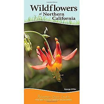 Wildflowers van Noord-Californië (avontuur Snelzoekgidsen)