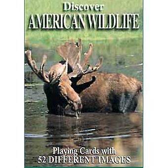 Löydä yhdysvaltalainen villieläinten joukko 52 pelikortin pakalla + Jokerit