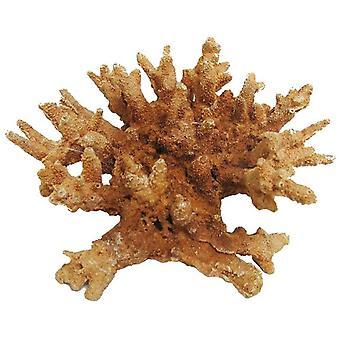 Klasyczny Koral Życia Koralowy - 185mm