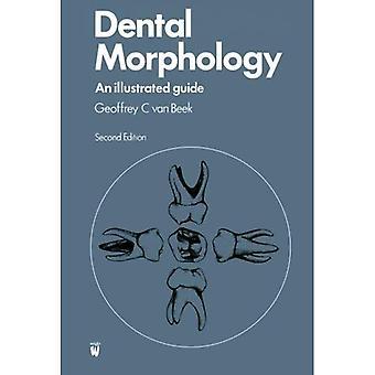 Morphologie dentaire: Un Guide illustré