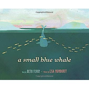 A Small Blue Whale by Beth Ferry - 9781524713379 Book
