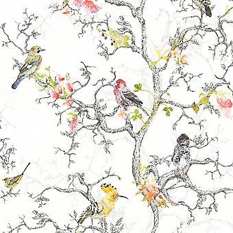 Ornitologia aves wallpaper Holden