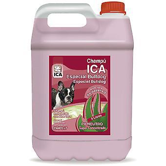 Ica Champú Bulldog 5Lt Aloe Vera (Perros , Higiene y peluquería , Champús)