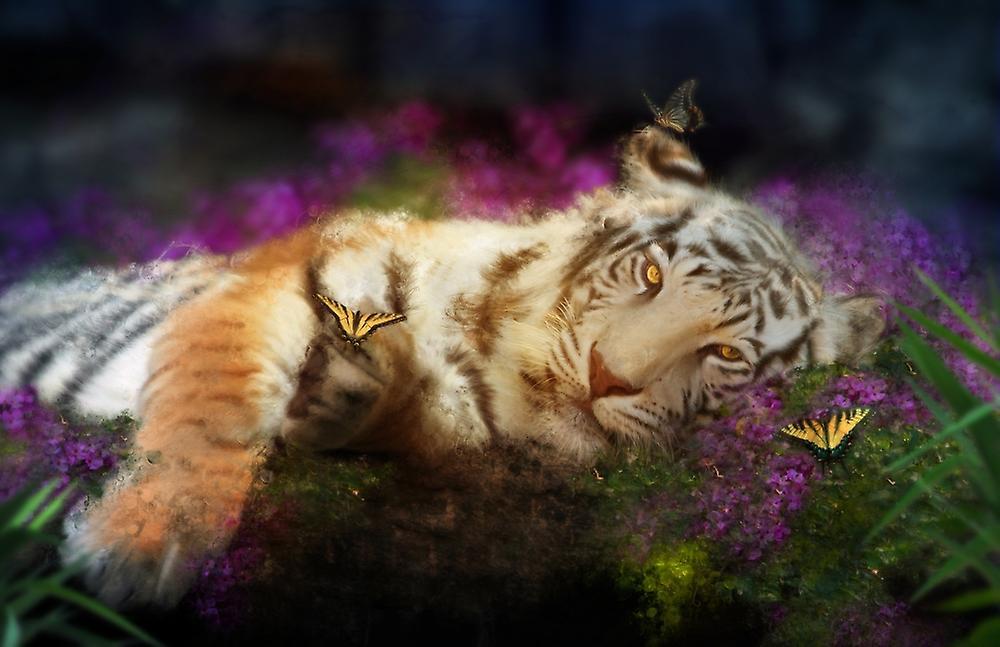 Спокойной ночи тигры анимация