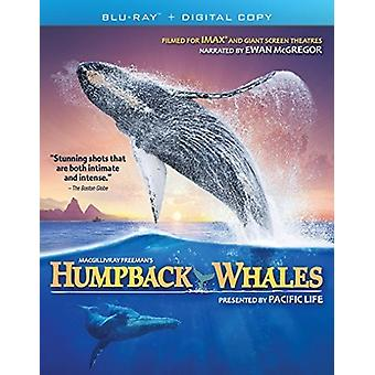 Buckelwale [Blu-Ray] USA import