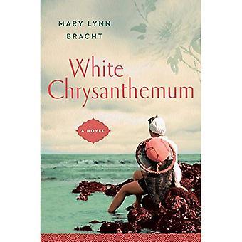 Vita krysantemum