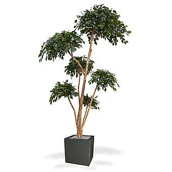 Kunstmatige Ficus Exotica Layer x6 300 cm kunstplant