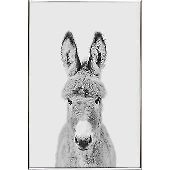 JUNIQE Print -  Donkey Classic - Haus- & Bauernhoftiere Poster in Schwarz & Weiß