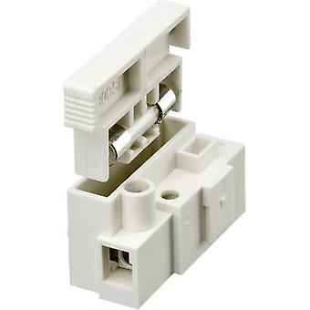 Adels-Contact 175001V9 Screw terminal flexible: 2.5-4 mm² rigid: 2.5-4 mm² Number of pins: 1 1 pc(s) White