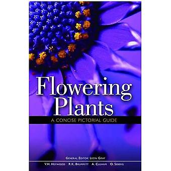 Flowering Plants. A Concise Pictorial Guide
