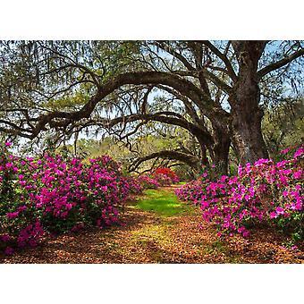 Behang muurschildering lente bloemen en Oaktrees