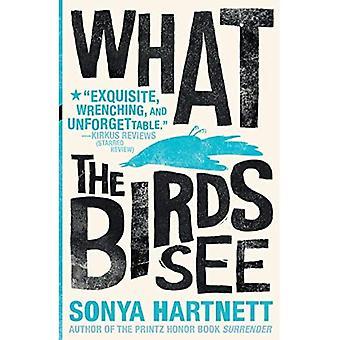 Ce que les oiseaux voir