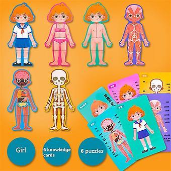 Menschliche Körperstruktur kognitive Holz Puzzle und biologisches Spielzeug