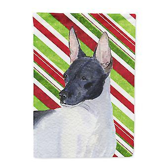 Carolines skatter SS4549-flagg-foreldre Rat Terrier Candy Cane Holiday Christmas