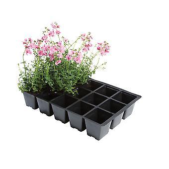 Worth Gardening 15 Cell Inserts x 5 W0010