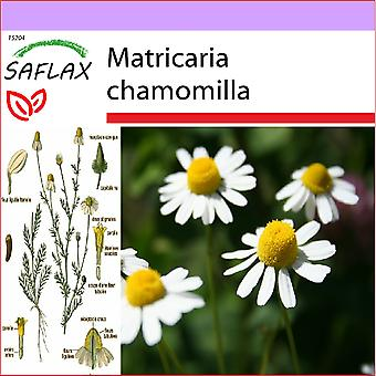 Saflax - 300 seeds - Mayweed - Camomille sauvage - Camomilla - Manzanilla común - Echte Kamille