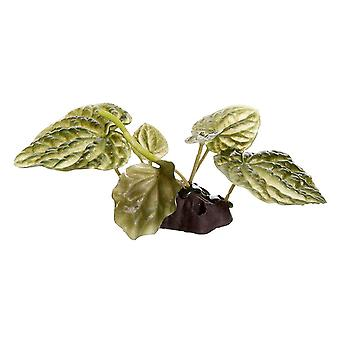 Fluval Small Lotus Plant 10cm