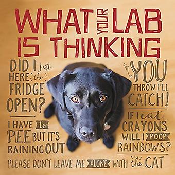 What Your Lab Is Thinking by Willow Creek Press - 9781682348222 Book
