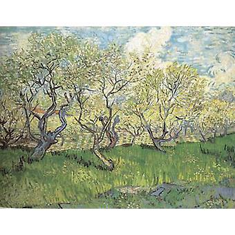 Verger en fleur, Vincent Van Gogh, 50x40cm