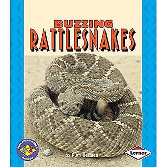 Serpents à sonnettes bourdonnement