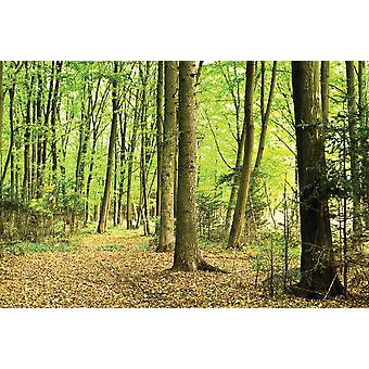 Wallpaper Mural Sunlight In Green Forest (400x260 cm)