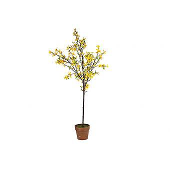 Påske treet Forsythia blomstre fra området Gisela Graham påske