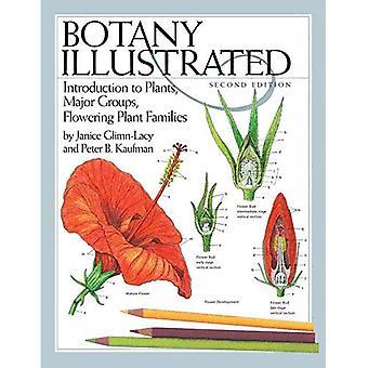 Botanikk illustrert: Introduksjon til planter, store grupper, plante familier