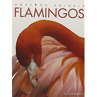 Amazing Animals Flamingos