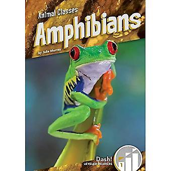 Anfíbios (Classes animais: Dash! Leitores nivelados, nível 1)