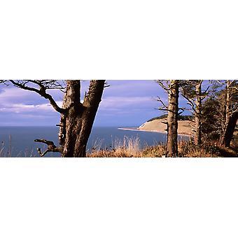 Голые деревья на побережье Ebeys посадки Whidbey острова Вашингтон государство США печать плаката
