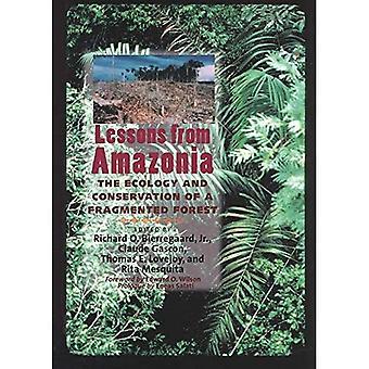 Lärdomar från Amazonia: Ekologi och bevarande av en fragmenterad skog