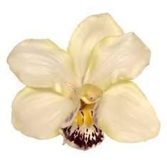 Boolavard Orchid Flower Hair Clip Bridal Hawaii Party Girl (Cream)