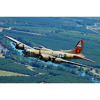 B-17 Flying Fortress flying over Concord California Poster Print by Phil WallickStocktrek Images