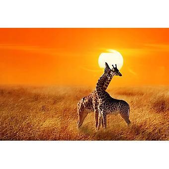 Wallpaper Mural Giraffes contro Tramonto