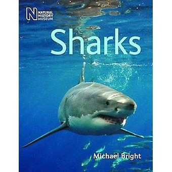 Sharks by Michael Bright