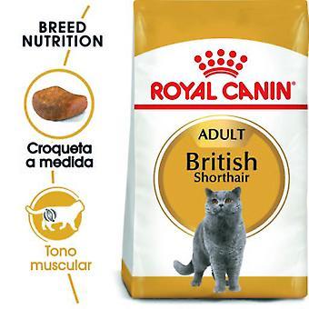 Royal Canin  British Shorthair Pienso para Gato Adulto de Raza (Gatos , Comida , Pienso)