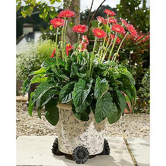 Potty Feet Decorative Daisy Themed Plant Pot Feet - Bronze Color - Set of 3