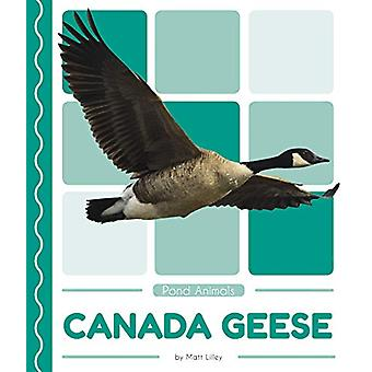 Pond Animals - Canada Geese by  -Matt Lilley - 9781641855761 Book
